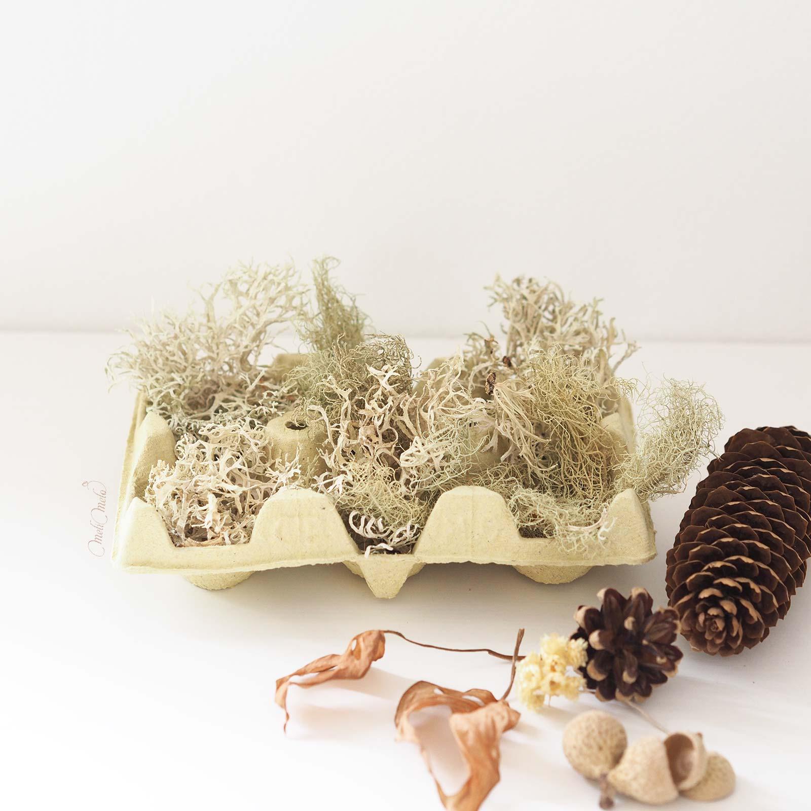 DIY-deco-automne-lichen-cone-sapin-boite-oeuf-laboutiquedemelimelo