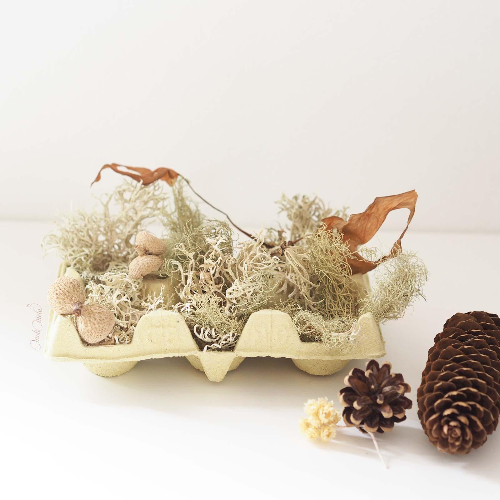 DIY-deco-automne-lichen-glands-boite-oeuf-laboutiquedemelimelo