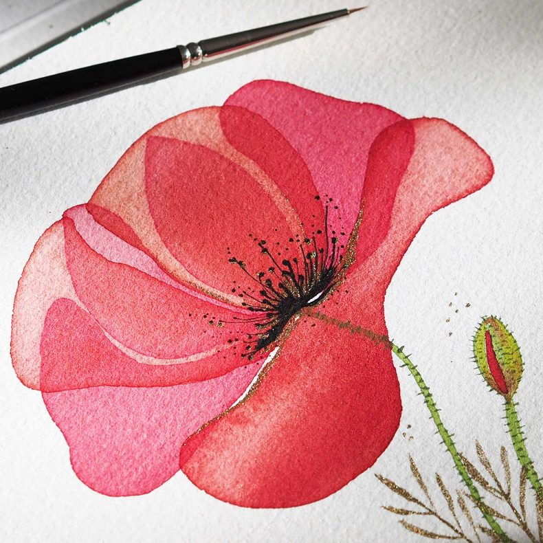 aquarelle-coquelicot-encre-or-poppy-watercolor-laboutiquedemelimelo