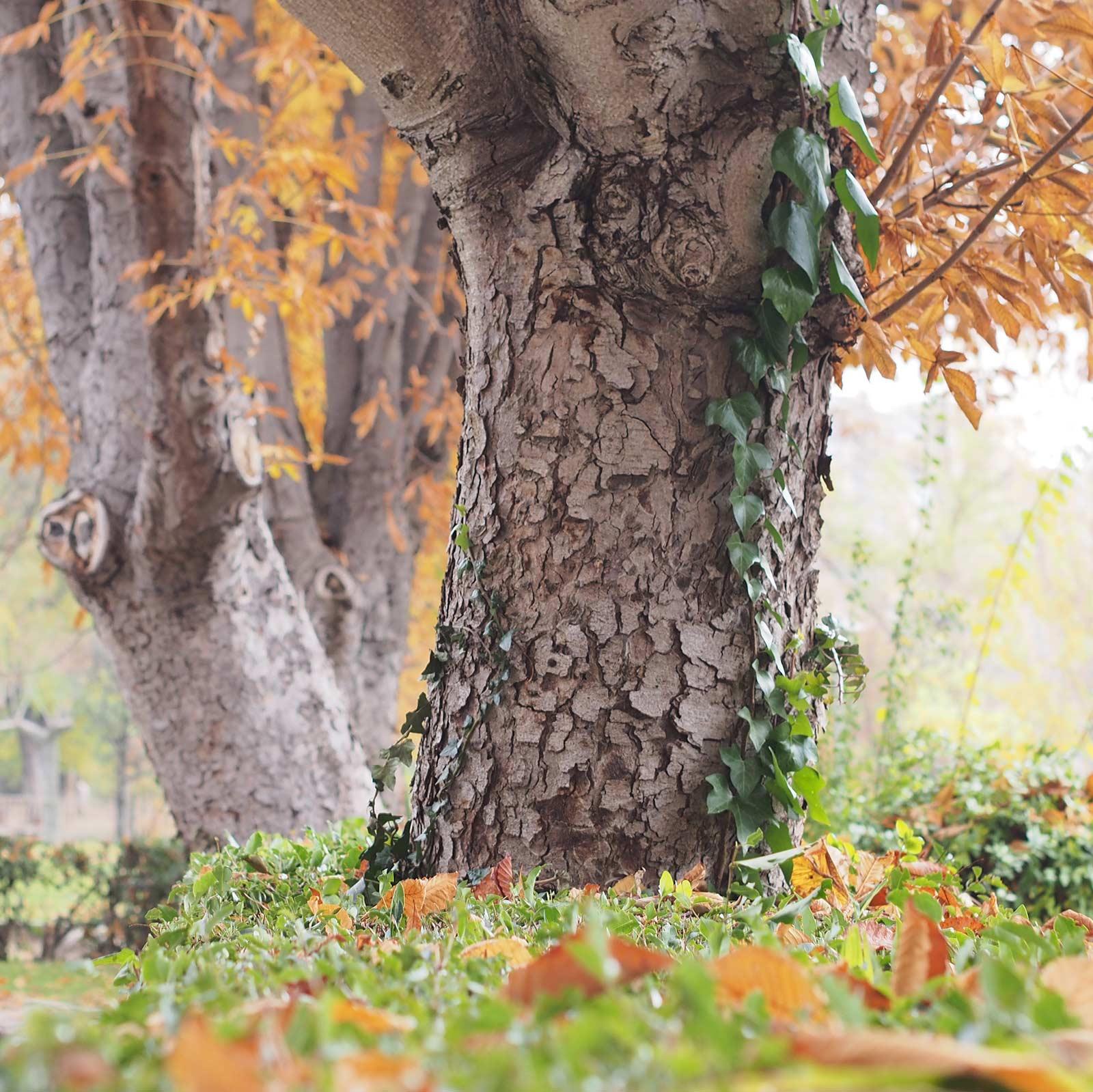 automne-a-bicyclette-valladolid
