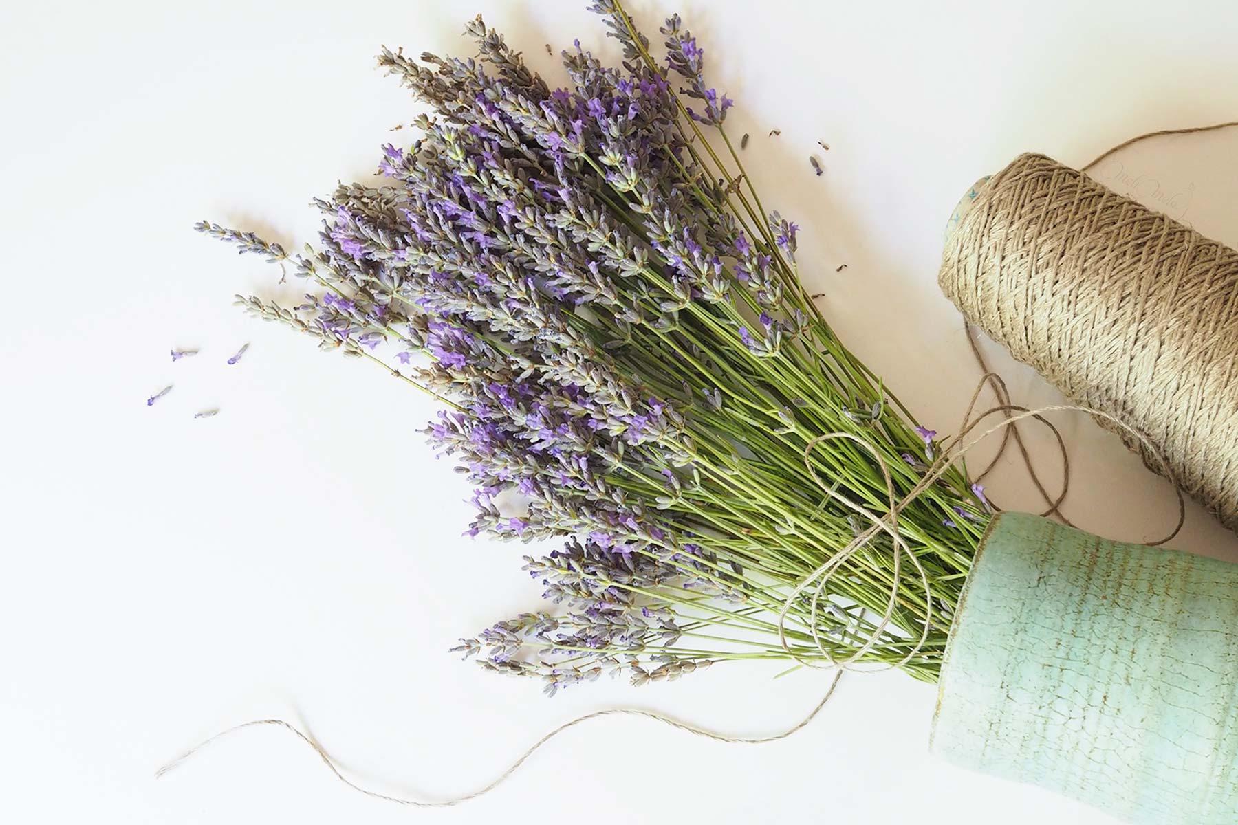 bouquet de lavande fraîche parfum naturel laboutiquedemelimelo