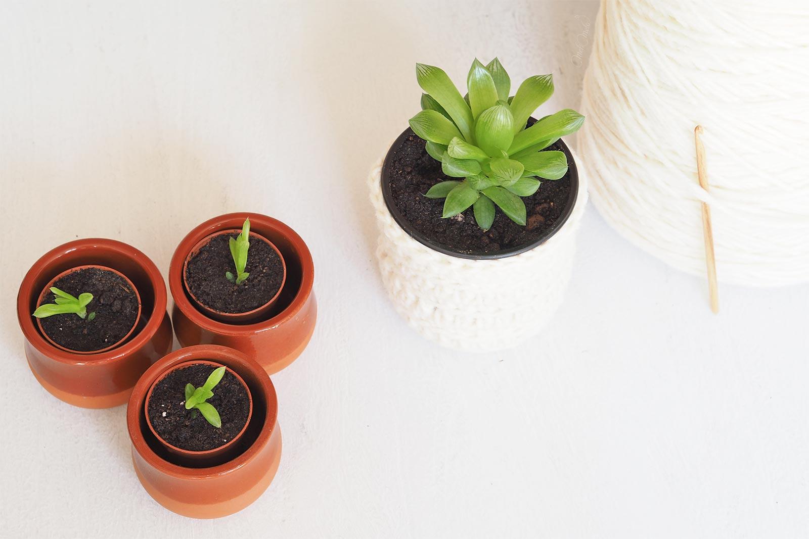 crochet cache pot baby gardening succulent Haworthia Cymbiformis La Boutique de MeliMelo