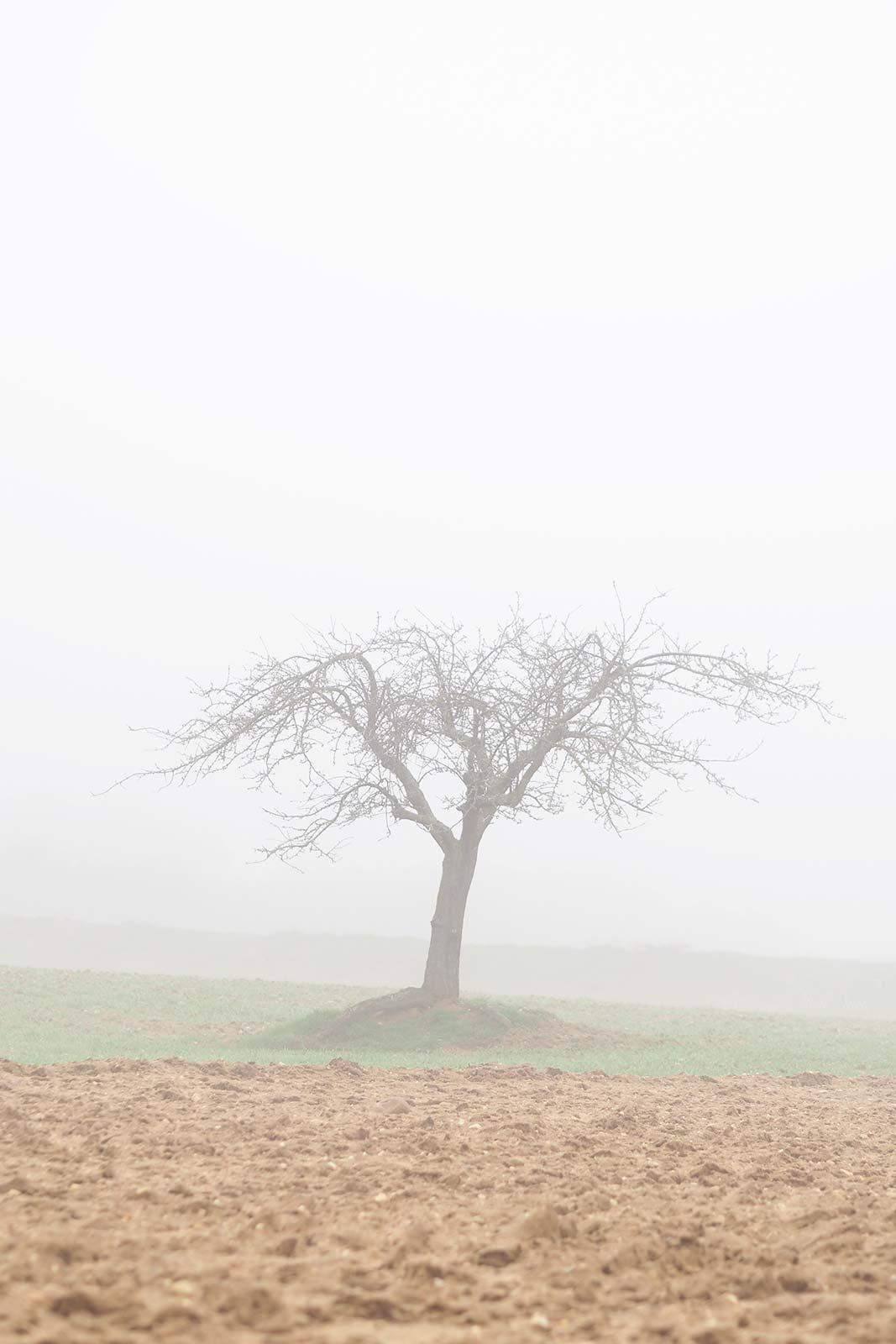 brouillard-hiver-bamba-invierno-2020