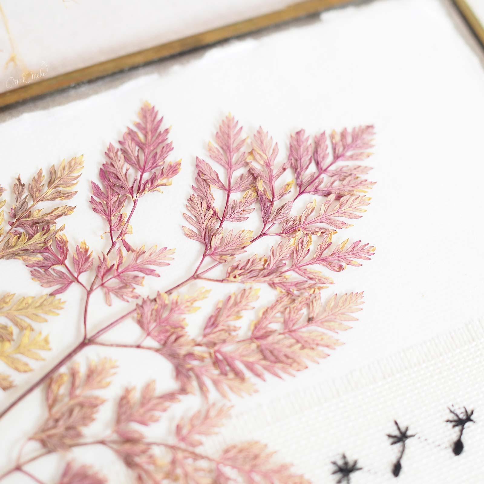 cadre-vegetal-sec-herbier-feuillage-rose-laboutiquedemelimelo