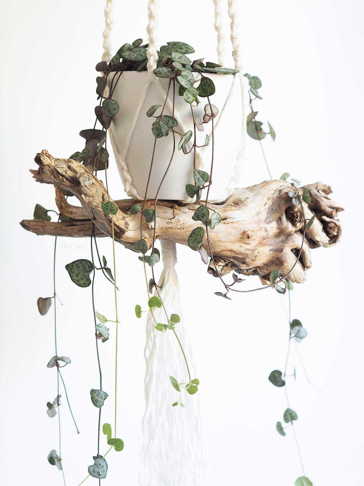 détail bois sculptural suspension macramé ceropegia woodii laboutiquedemelimelo