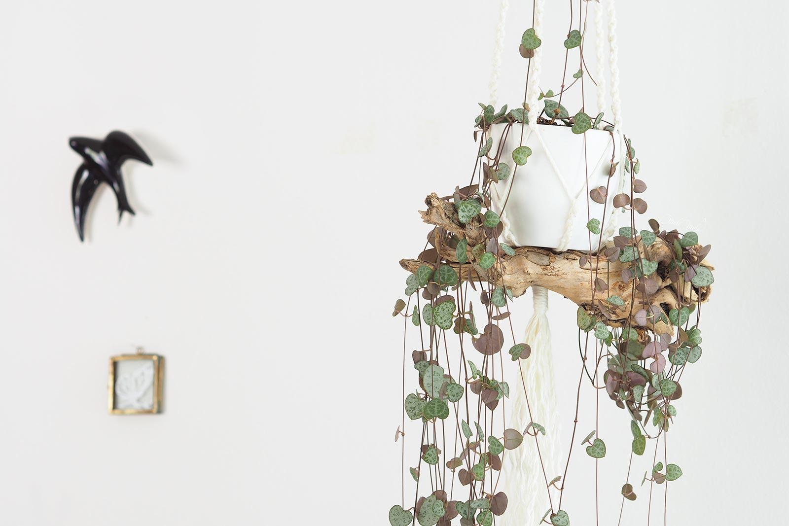 ceropegia-woodii-suspension-bois-trois-ans-laboutiquedemelimelo