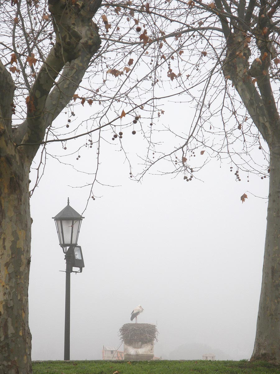 cigogne brouillard hiver cigueña invierno zamora boutique melimelo