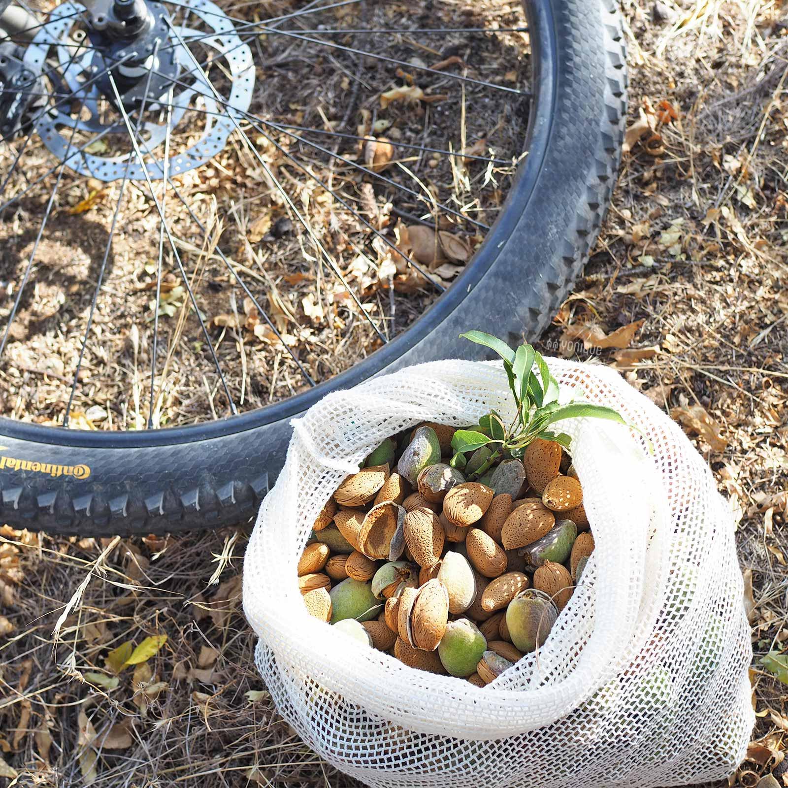 cueillette-amandes-almond-september-castilla-leon-escapade-bici-bike-yoniquenews