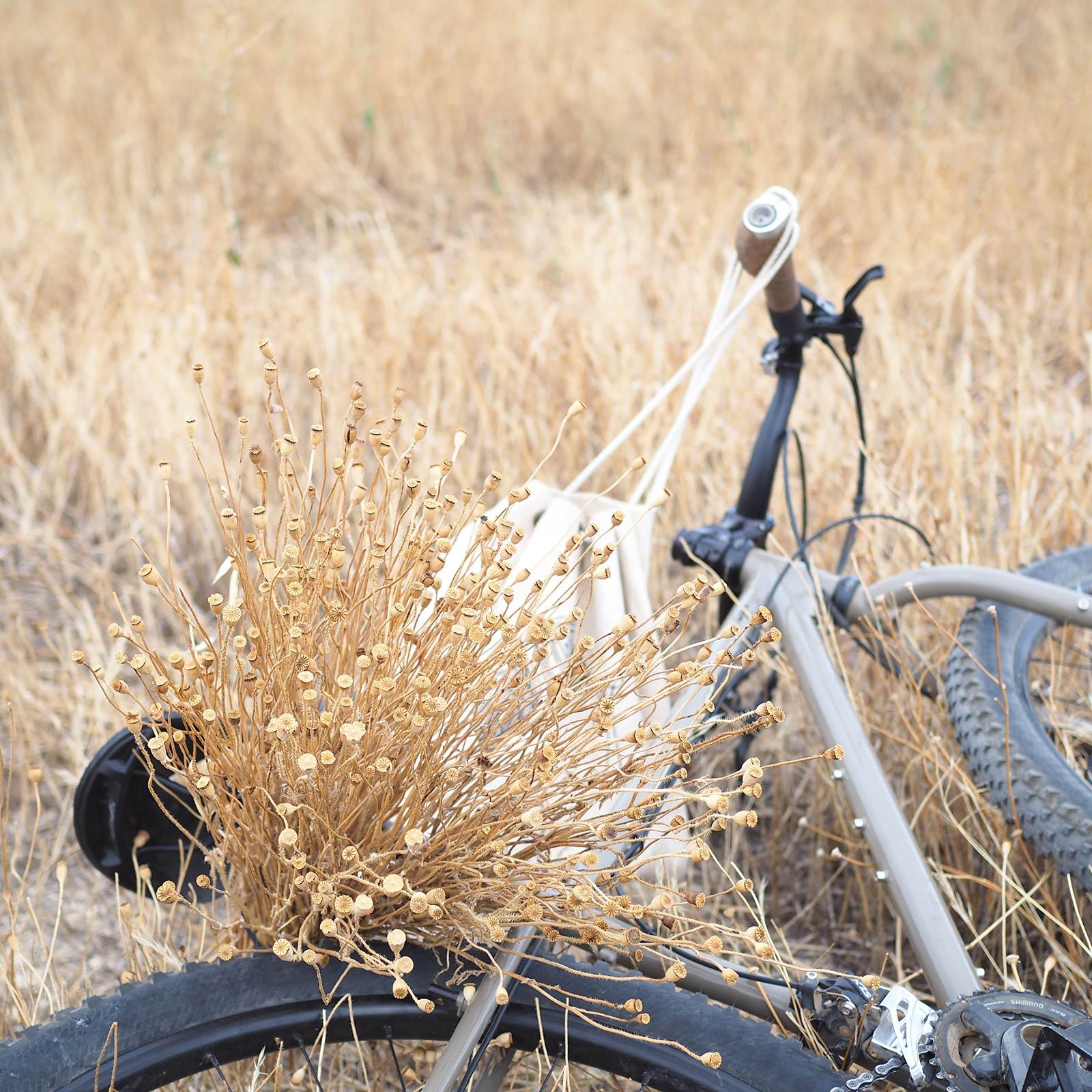 cueillette-coquelicots-automne-bicyclette surlybike yoniquenews