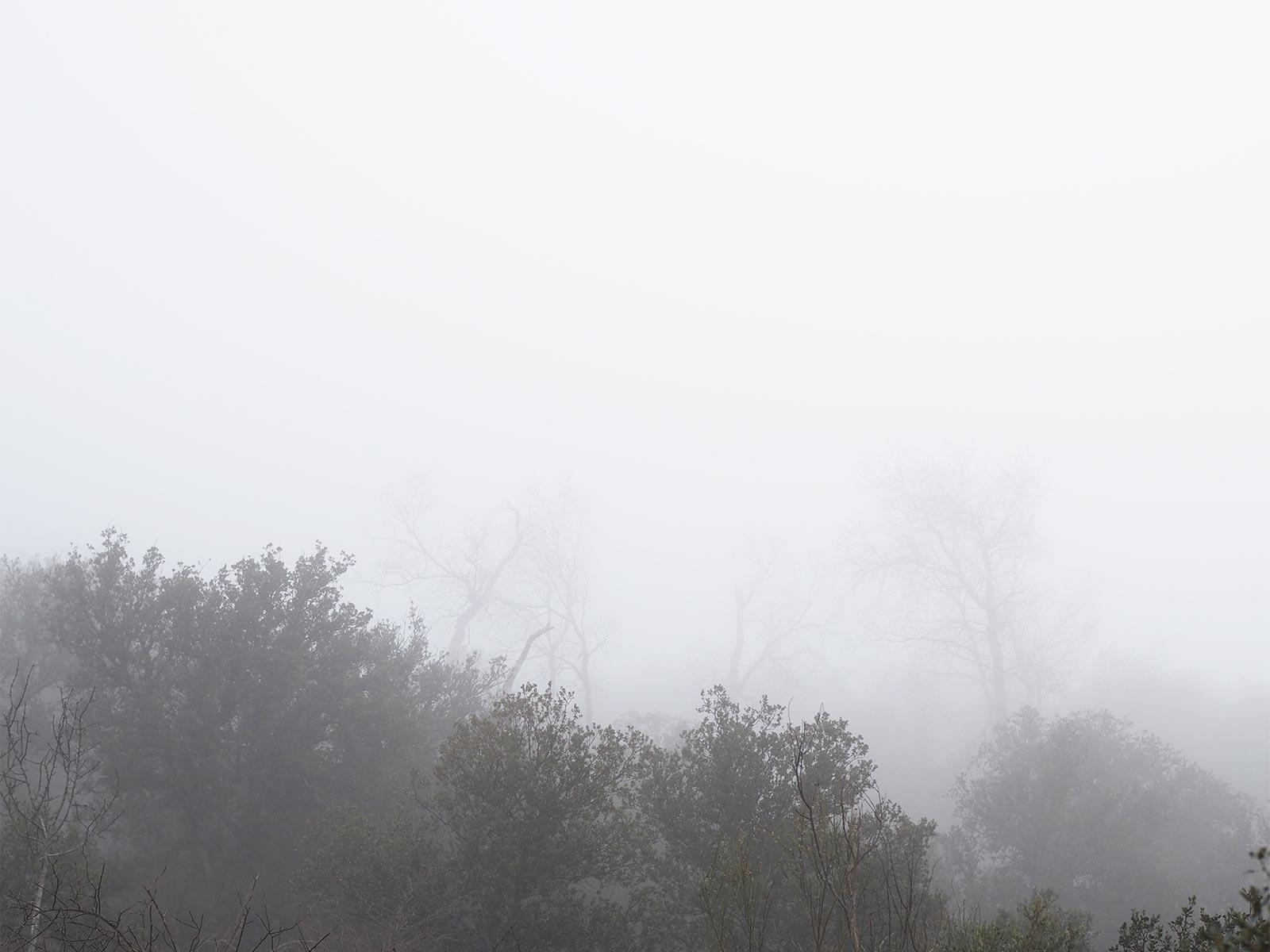 encinar-toro-niebla-invierno-enero-2020-zamora