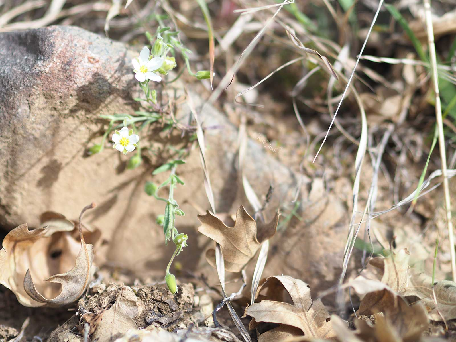 feuilles-fleurs-fin-ete-sanabria-zamora-laboutiquedemelimelo