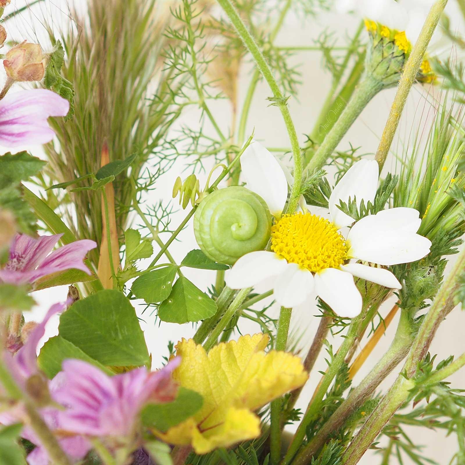 fleur-graine-printemps-inspiration-broderie-laboutiquedemelimelo