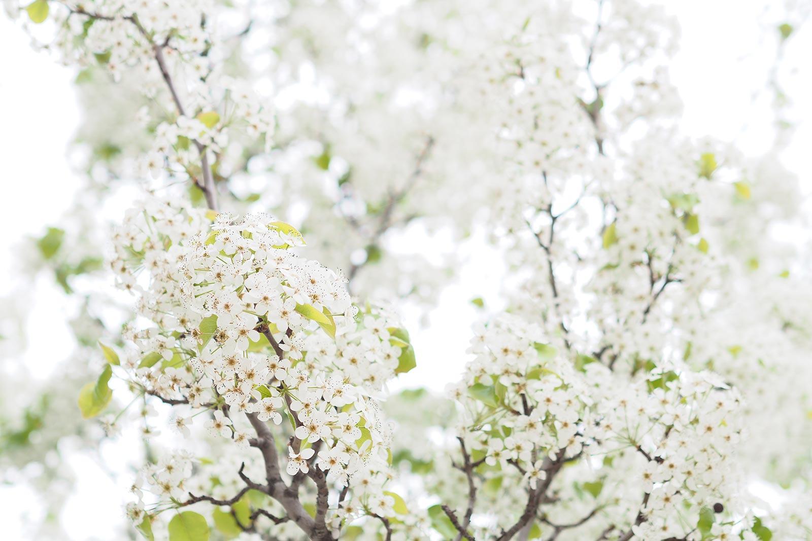 floraison-printemps-flowersbymelimelo-laboutiquedemelimelo