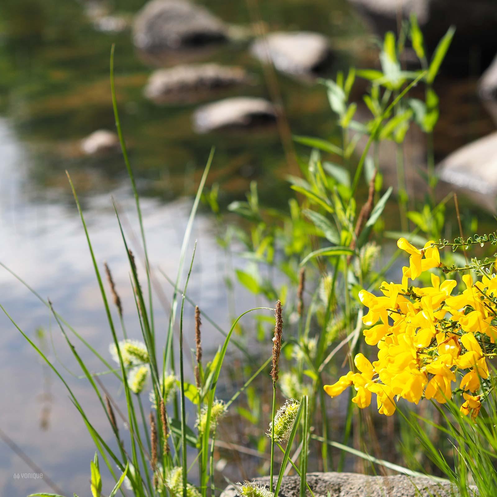 flores primavera rio tera sanabria zamora yoniquenews