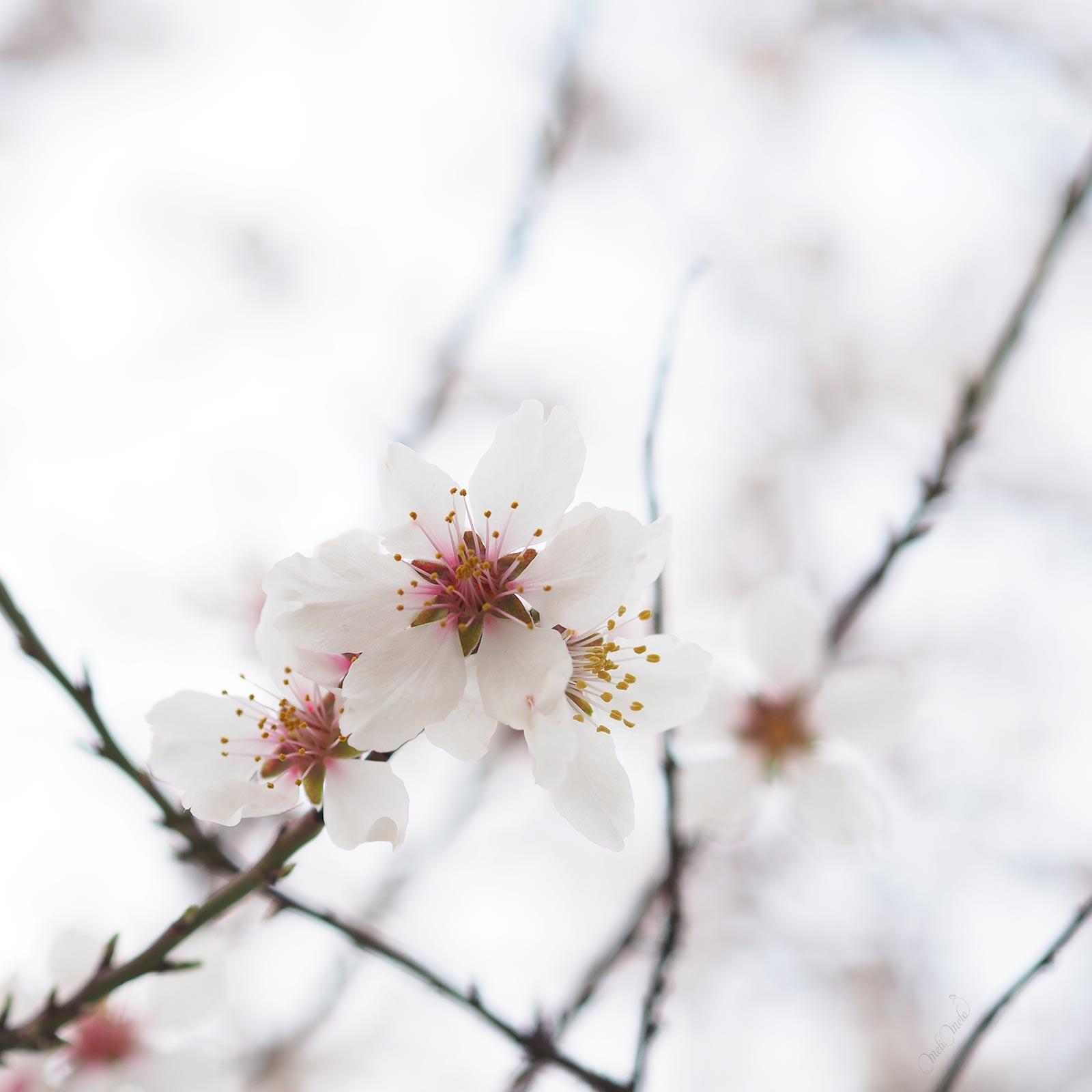 parfum premières fleurs printemps floración primavera valladolid laboutiquedemelimelo