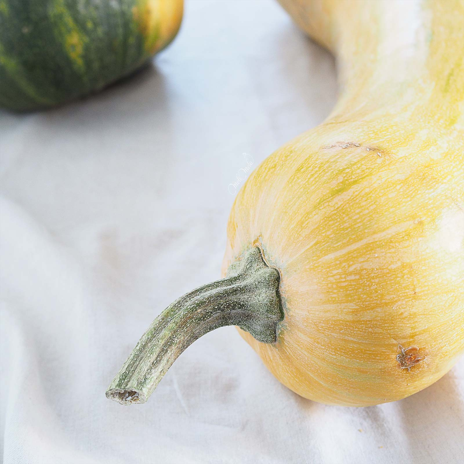 pedoncule-courge-butternut-potager