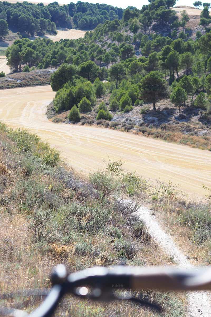 pinar-campo-valladolid-montes-torozos-castilla-leon-yoniquenews-laboutiquedemelimelo