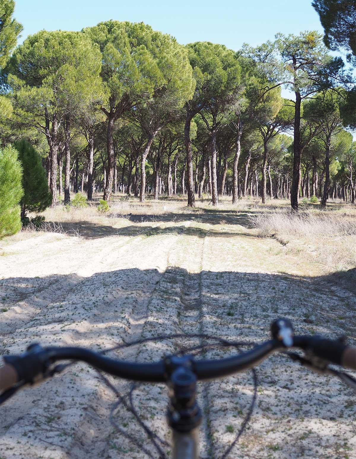 pinares bike spring Valladolid Medina del Campo en bici YoniqueNews