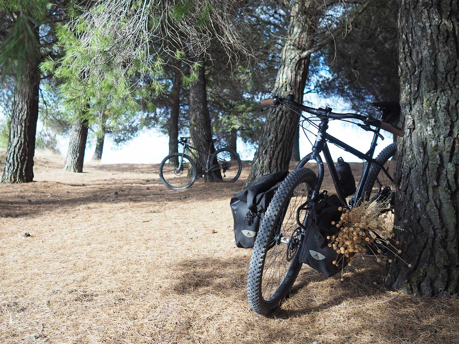 pinares-pinedes-valladolid-caminos-bici-octubre-yoniquenews