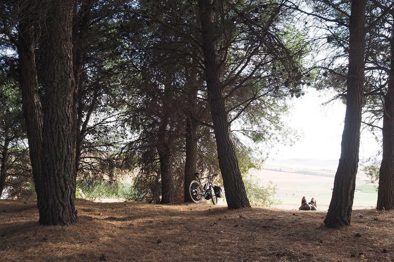 pinares-siesta-pinedes-valladolid-caminos-bici-octubre-yoniquenews