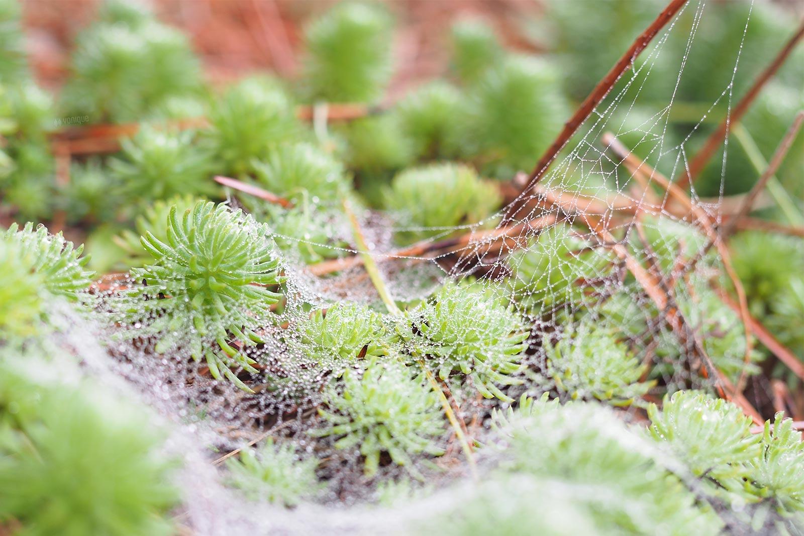 poésie pinède hiver vegetación pinar invierno Castilla y León yoniquenews