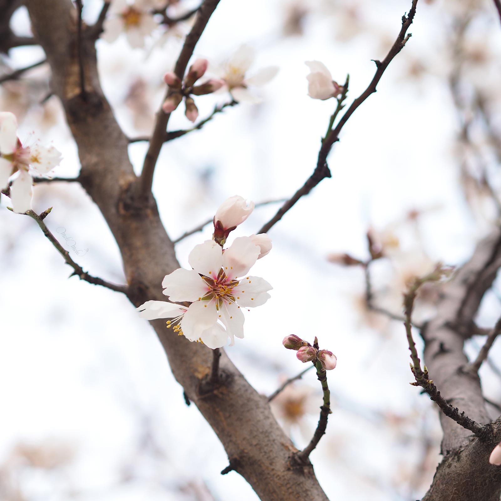 premières fleurs printemps floración primavera valladolid laboutiquedemelimelo