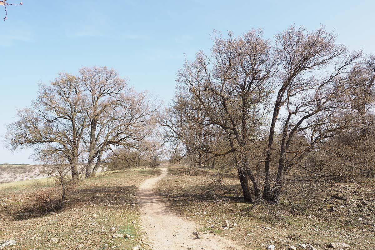 primavera-finales-marzo-2021-robledal-montes-valladolid-yoniquenews