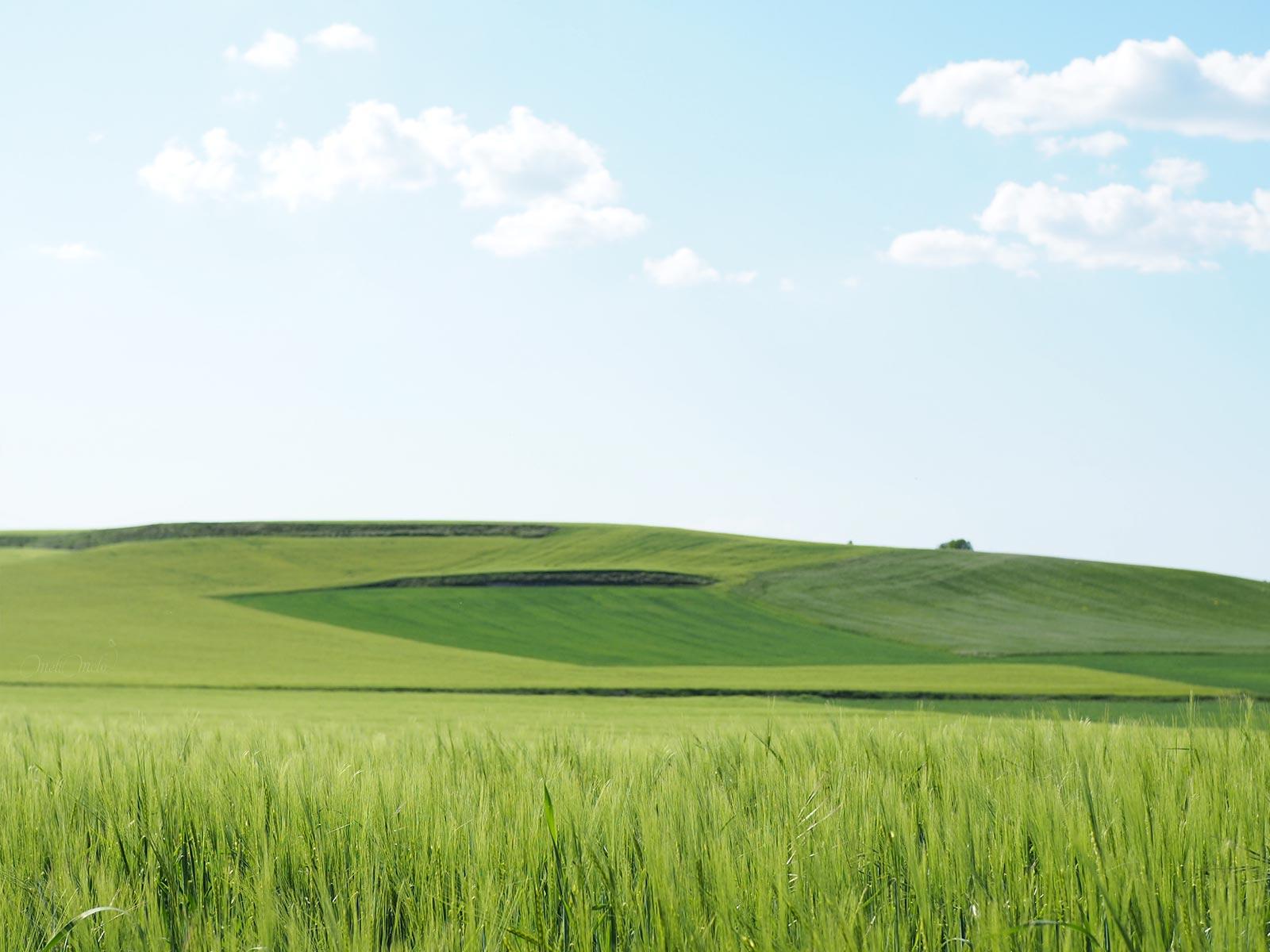 promenade à bicyclette champs blé printemps Castilla León enbici yoniquenews