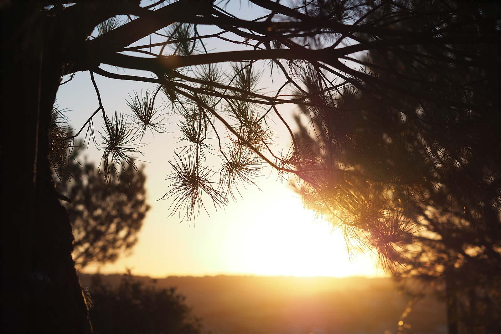 puesta-sol-pinares-valladolid-sunset-spain-yoniquenews
