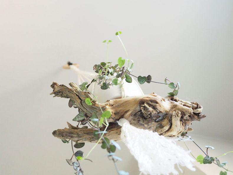 suspension macramé détail bois sculptural ceropegia woodii laboutiquedemelimelo