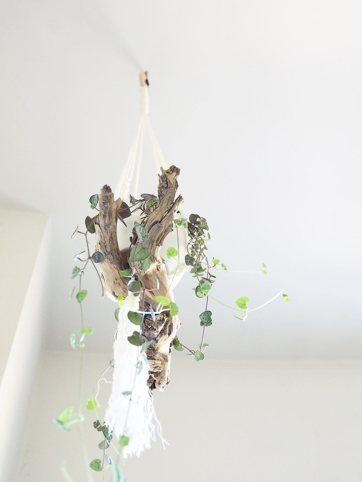 bois sculptural suspension macramé ceropegia woodii laboutiquedemelimelo