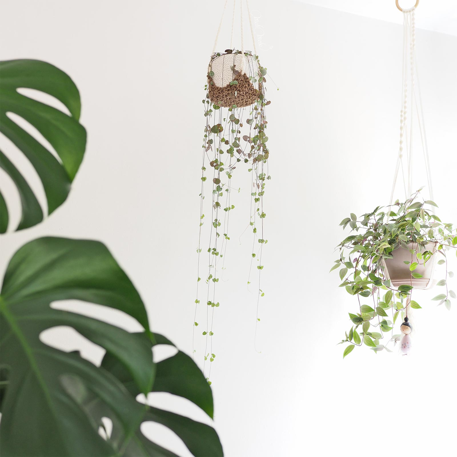 suspensions-ceropegia-woodii-misere-tradescantia-pink-hill-laboutiquedemelimelo