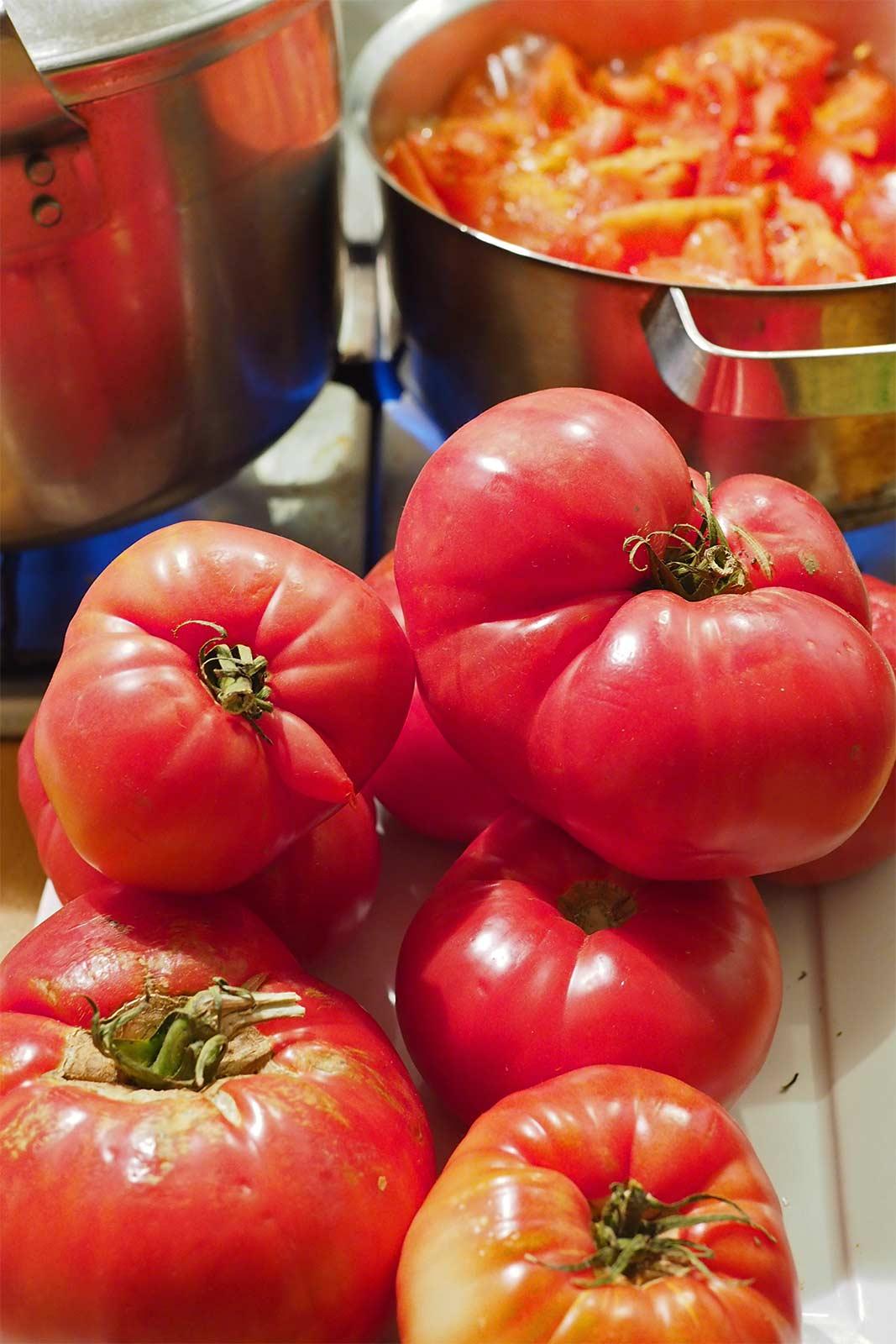 tomate-potager-huerto-preparacion-salsa-laboutiquedemelimelo