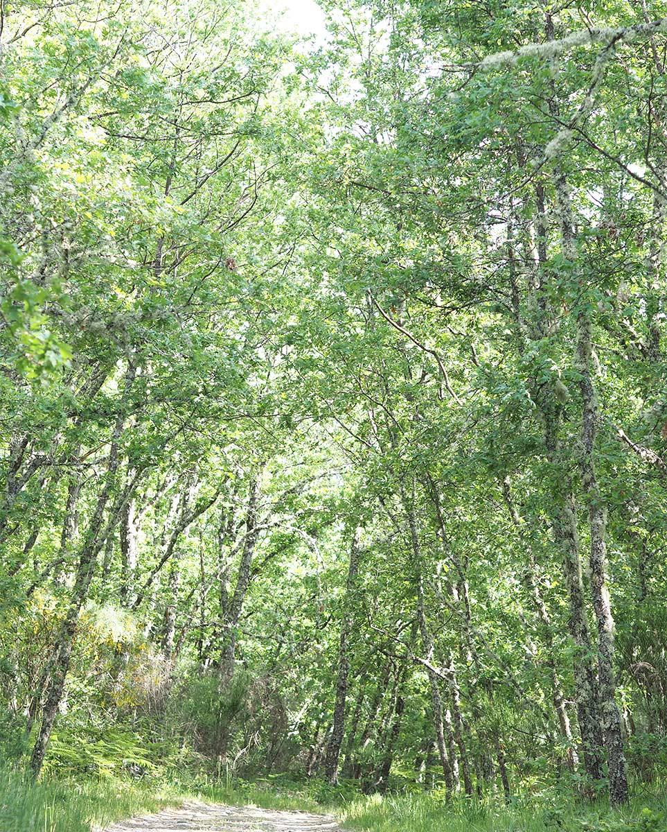 verano bosque roble robledal Sanabria españa laboutiquedemelimelo