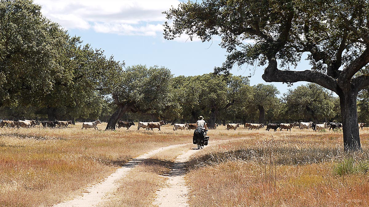 viaje-bici-salamanca-campo-azaba-dehesa-vaquillas-travel-bike-yoniquenews