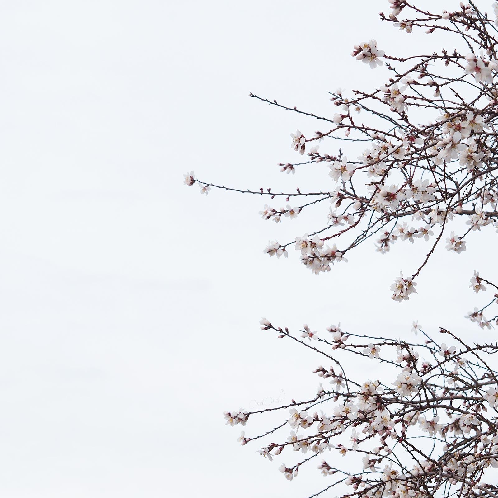 ciel fleuri printemps floración primavera valladolid laboutiquedemelimelo